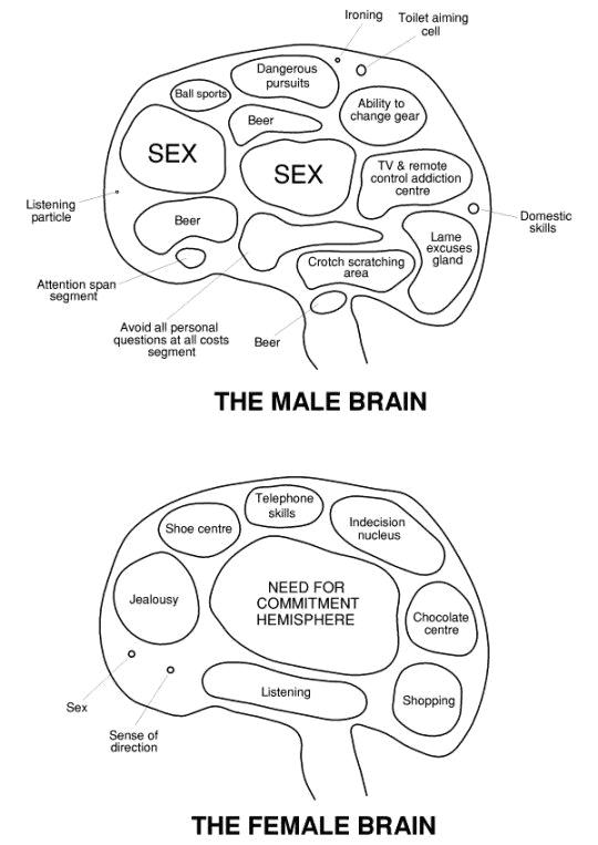verschillen tussen mannen en vrouwen cartoon